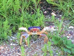 Yes, there are some crabby types in Paradise.