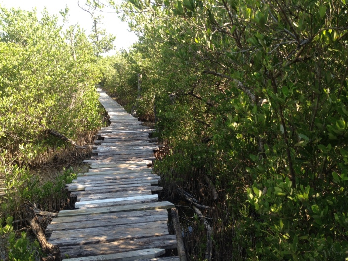 """... Moments later, a soul-chilling scream rises out of the mangroves. Birds tke flight and the very air grows still and hot with trepidation. """"A! Snake! There! Is! A! Snake!"""" cries out Rose. She was right, too. It looked mighty pissed off as it slithered out of the sun and disappeared into a mangrove tree."""