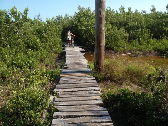 At the Marco Gonzalez Mayan ruins site in the southern tip of Ambergris Caye, Rose heads boldly into the mangrove bush, well ahead of me.