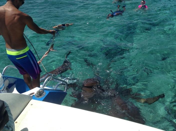 snorkel-sharks
