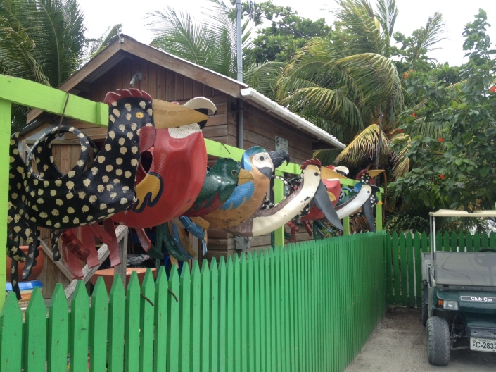 A flock of hanging planters roost on the fence at Ladybug nursery in San Pedro, Belize.
