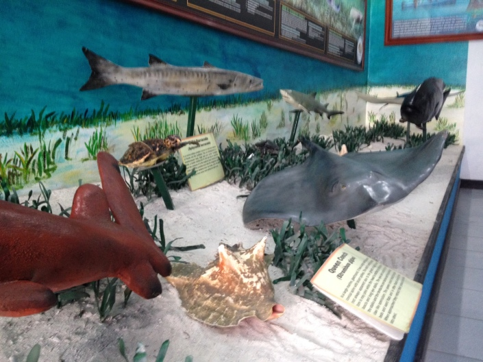 Hol Chan Marine Reserve's offices/museum is worht stopping into before you go snorkeling. Remember an informed snorkeler is an enlightened snorkeler -- or at least one that knows the names of some of the crazy beautiful stuff you see beneath the waves.