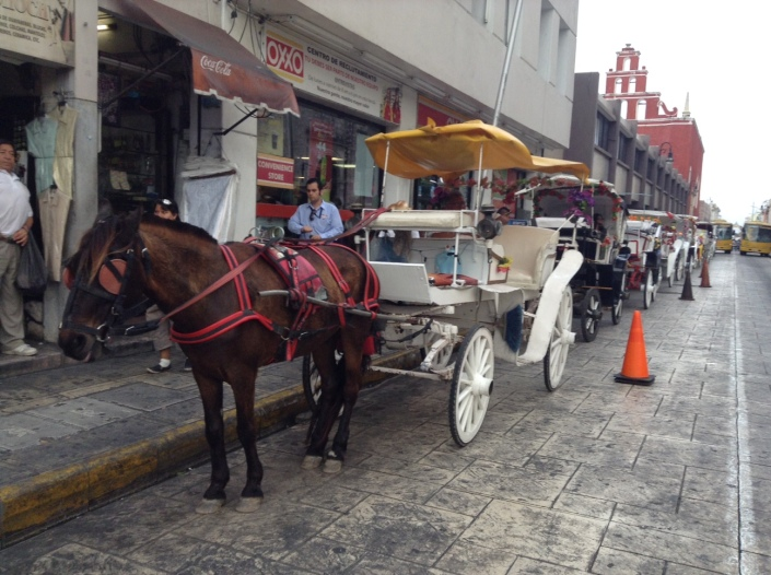 Horse carriages are popular on the streets  around the many parks in the historic district of Merida.