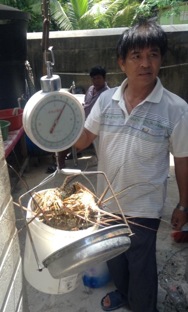 cc-lobsta-weighin