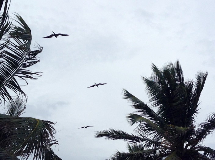"Sit back. Relax. Exhale. Now, gaze upon the birds in flight. Let's count them backwards. Ready? 3 . . . 2 . . . 1. There. Now do you here the redolent opening chords of ""Free Bird"" by Lynyrd Skynyrd? No? Let's repeat ..."