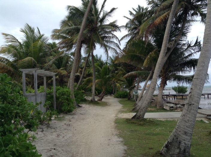 A simple walk on Ambergris Caye can be a thing of beauty. Stay focused on the path. Ignore the sargassum and plastic trash to your immediate right and all will be well. Crazy, right. But it works.