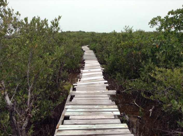 One pathway leads into and out of the Marco Gonzalez Mayan Site. This boardwalk is one-quarter mile long.