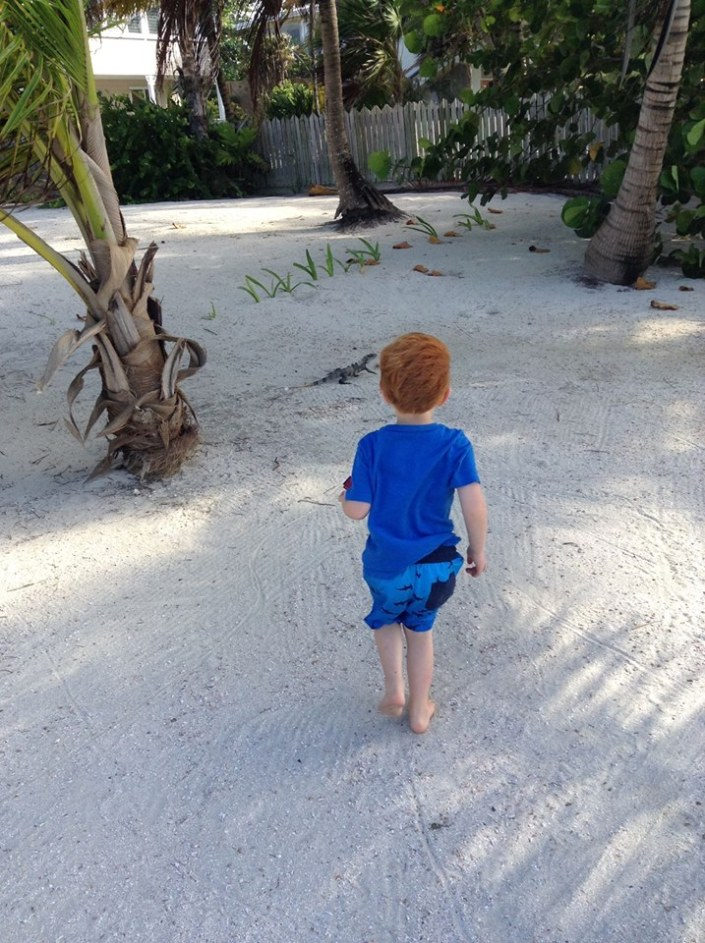 Grandson Brody approaches a lizard cautiously. Try as he might, he was never able to catch one, thank god.