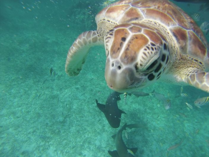 Nose-to-nose with a ticked off turtle who thought my camera was food.