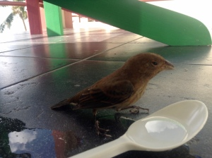 The first bird to fly into the glass door on Sunday.