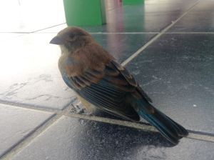 Surprise! A third bird hits the door, this one on Monday afternoon. It too eventually flew away.