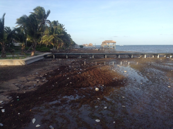 A fresh wave of stinky sargassum has rolled ashore with an extraordinary amount of plastic garbage.