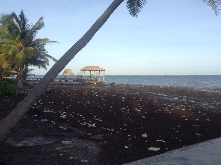 A fresh wave of stinky sargassum has rolled ashore with an extraordinary amount of plastic garbage. Where did it come from?
