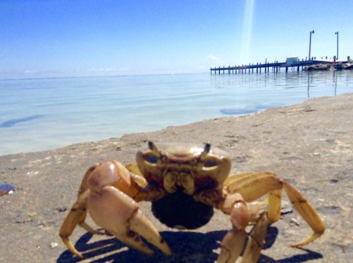 I watched the crab climb out of the water, up the sheer concrete wall and on to the top. He wasn't bothered by me and I clicked away in his face like he was used to it. A media-hungry celebrity crab. He answers to Donald, and wants to make America great again. Then again, this could be the heat talking.