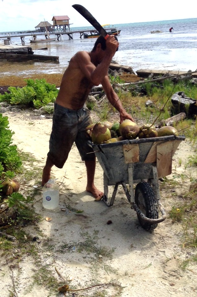 Jose cruises up and down the coast of Ambergris Caye harvesting fresh coconut water. Want to know what hard work is? Try climbing coconut trees in bare feet then spend the day cutting open the nuts to pour each cupful of water into jugs. The of course, you must head out to sell your product ....