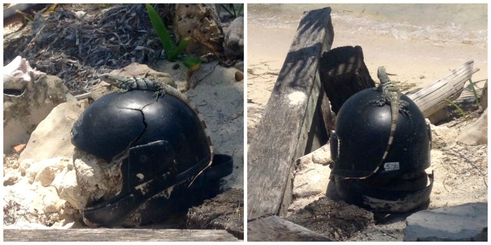 That's right, some kind of Darth Vader Junior motorcycle helmet with a lizard on top. Granted, you don't see this sort of thing every day, but, really? On a tropical island? This is the best I could do?