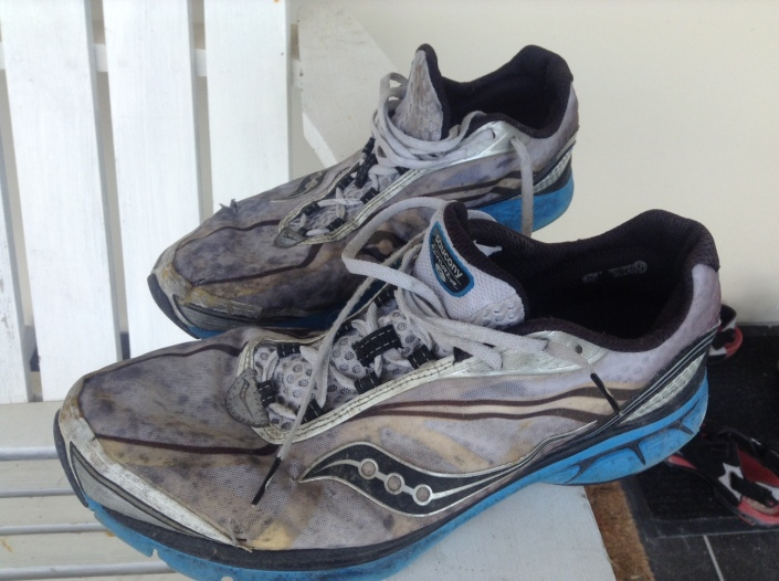 My running shoes -- can I still call them that if I haven't run in more than a year? They were animal-free when I dug them out of the back of the closet, happy to say.