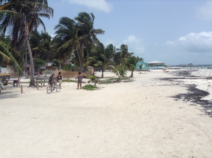 The folowing pictures will try to grasp the scope of change along Caye Caulker's waterfront. So much more space -- carpeted with welcoming white sand!
