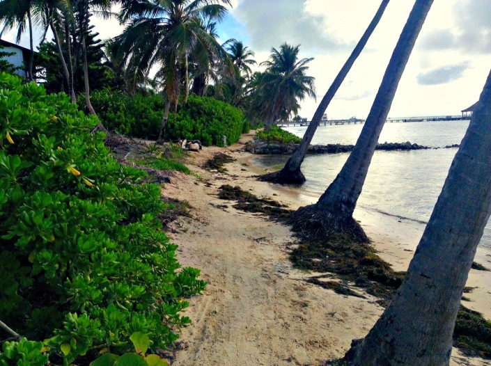 Now we're getting into an area that traditionally is left to the elements -- usually covered in plastic waste and seaweed. You can see what a great job the Grand Caribe crew did on Friday!