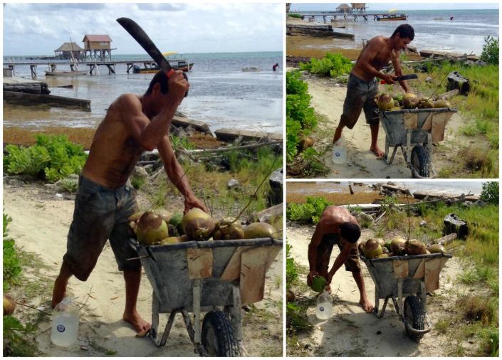 Island entrepreneur Jose fills his jugs with fresh coconut water. To bring them to market, the full jugs are attached to his handlebars by bits of netting he finds on the shore -- as many as 20 jugs dangle off his bicycle. And don't kid yourself -- this is hard work.