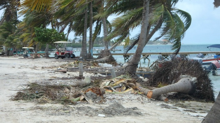 Tree clearing continues along Boca del Rio, San Pedro, on Saturday.
