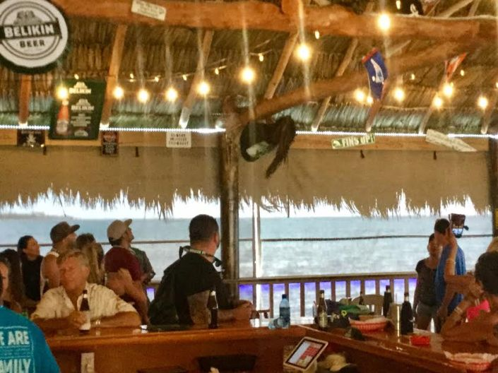Coconut Leo, reaching for the rafters on Sunday in the newly re-opened Palapa Bar & Grill in San Pedro, Belize.
