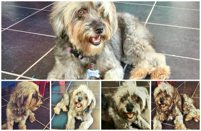 The many faces and charms of Moppit, supermodel of the canine jet set.