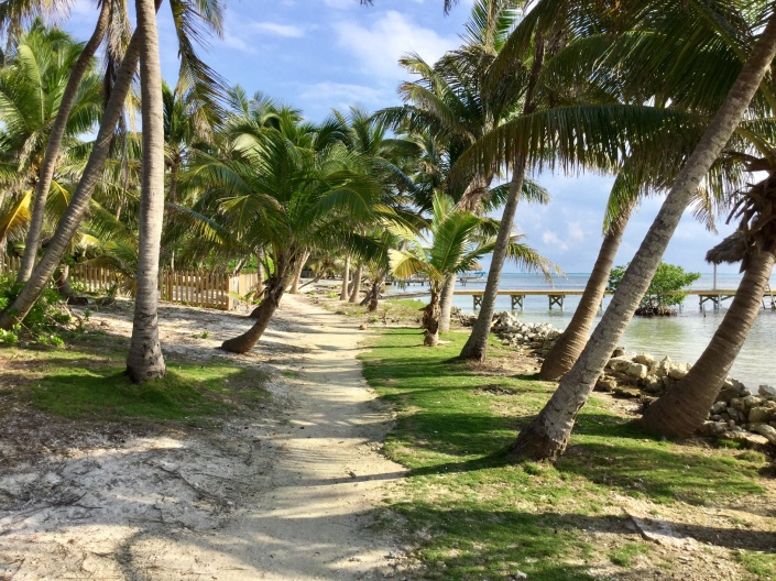 Moppit and I took our favorite walk this morning, up the coast through Tres Cocos. The properties on the water have really recovered from Hurricane Earl. There is hardly a sign the damage done.